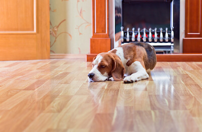 Can You Refinish Engineered Hardwood?