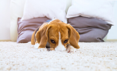 Have you Fallen For These Carpet Myths? It Might Be Time To Buy New Carpet