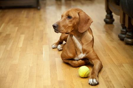 Are Pets A Dealbreaker For Hardwood Flooring