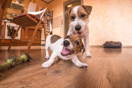 How To Love The Flooring You Select When You Have Pets
