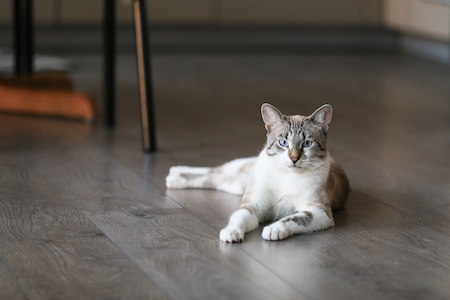 Cat Friendly Flooring Choices