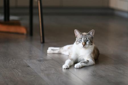 Cat Friendly Flooring Choices