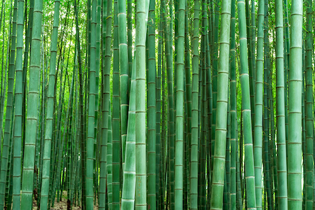 These Facts Will Make You Want Bamboo Flooring In Every Room In Your Home